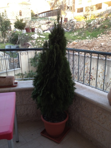 tree on my balcony